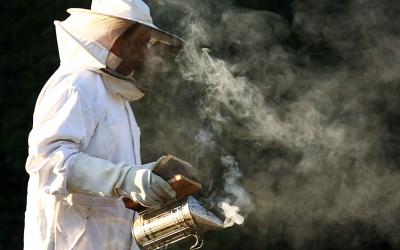 As abelhas e a polinização da vinha